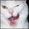 aikea_guinea: (Cats - Willow - Tongue)