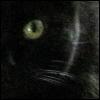 aikea_guinea: (Cats - Miss Kitty - Eye)