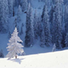 cuteness: (cold snow)