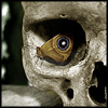 klgaffney: the pattern of a moth's wing forms the eye in a close up of a skull. (the unbiased eye)