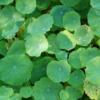 3rdofjune: (greenious)