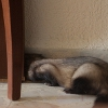 mustelidean: (Totally Hiding)