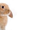 surrenders: ([event - bunny] sidelong)