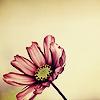 silvercharm: flower (pic#496686)