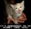 xaxas: (meow)