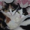 theantijoss: (Cats - Charlotte & Elsie)