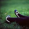 semirose: (Legs)
