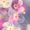 binaryfaerie: (Nature - Flowers)