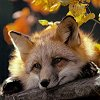 twistedchick: (autumn fox by Lanning)