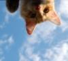 kittyrefuge: (Oh hi)