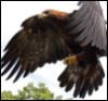 king_of_the_gods: (Eagle 1)