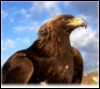 king_of_the_gods: (Eagle 2)