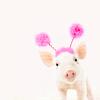 cupidsbow: (misc - piggy)