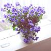 julia_kelen: (flowers)