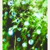 theadaze: (lush green)