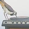 chatananas: fanmix (FANMIX: bird turntable)