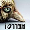 bluemeridian: (NF :: Kitten Hello)