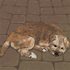 lizcommotion: drawing of my dog (small brown terrier) sleeping on a patio (rogue)