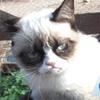 p_a_r_a_d_o_x: (Cat - pet virus)