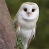 curiouslyhigh: (owl gettin all confused)
