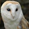 curiouslyhigh: (pensive owl)