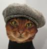 pure_basilure: (cat)