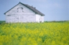 artemisprime: Alberta field and shed (Alberta field)