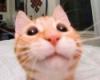 hanuma: (Кот ыжик)