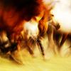 ankaa: (horses)