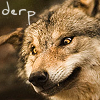 "go_dog_go: demented-looking wolf with text: ""Derp"" (wolf: derp)"
