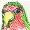 pseudogeek: The face of a peach-faced lovebird, hand drawn.  (face)