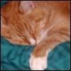 century_eyes: (Sleepy Spike)