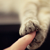 syntheid: crop of a human finger gently held by cat paws (touch)
