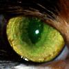 baggyeyes: Cat Eye (Cat Eye)