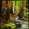 maegovannen: (enchanted forest)