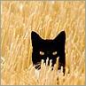 littleblack: (SummerCat)