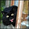 littleblack: (Grrr!!!)