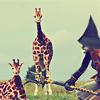 dagas_isa: Mithra from FFXI stalking RL giraffes (jais + giraffes)