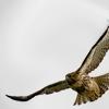 notachickenhawk: (bird: free)