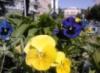 leona_t: (цветы)