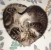mecurtin: two kittens making a heart shape (kitten heart)