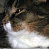arduinna: my kitteh (cat)