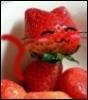 hanatokimi: (strawberry kitty)