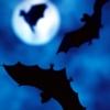 pyewackit: Various bats flying in the night sky. (Bats, halloween)
