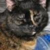 inquisitiveraven: Purza the cat (Purza)