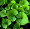 nancylebov: (green leaves)
