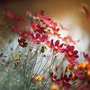 ancsi: (őszi virágok)