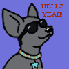 seventhbard: Drawing of a grey Chihuahua in sunglasses, with text Hellz Yeah! (Hellz yeah)
