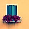 chazzbanner: (window box)