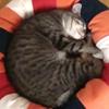 lluvia: Loki ‡ My Kitty ‡ ♥ (MY LIFE IS SO HARD YOU GUYS)